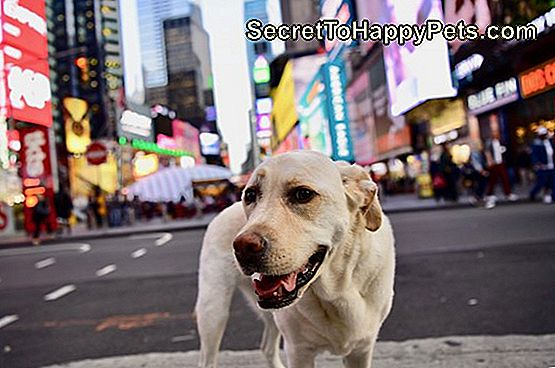 hond in Times Square