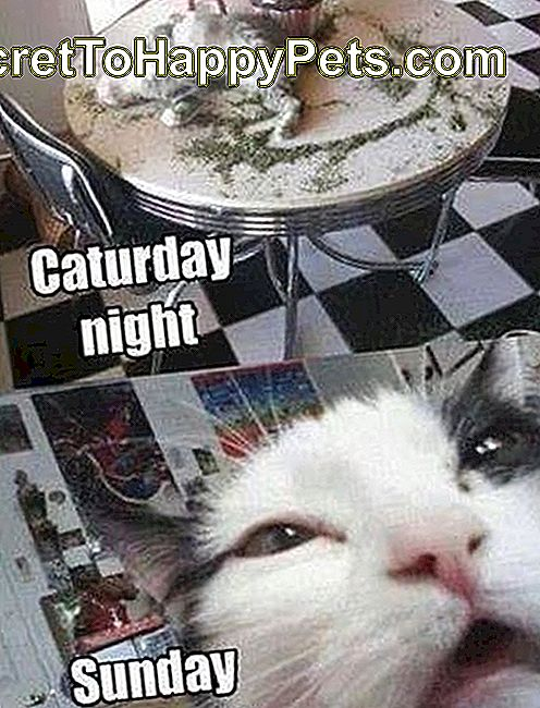 Caturday night