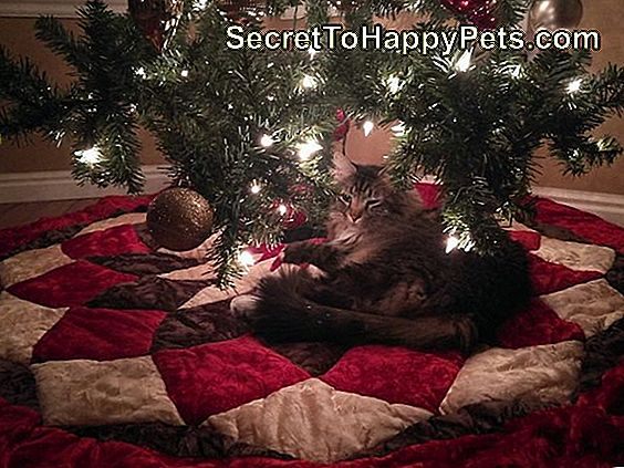 Chat, regarder, ornement arbre noël