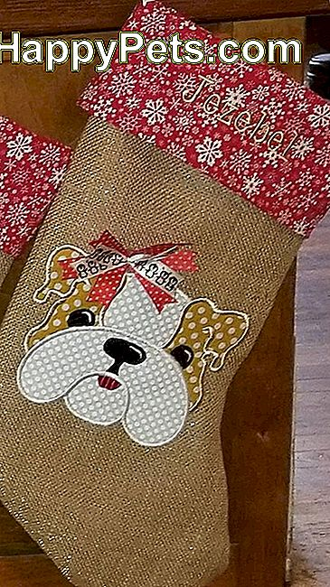 Bulldog Stocking