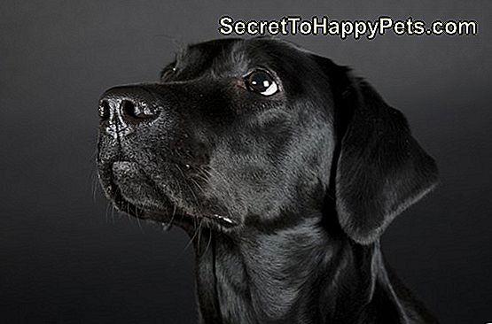 Χαριτωμένο μαύρο σκύλες