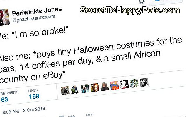 25-tweets-about-pets-and-halloween-that-is-possible-af