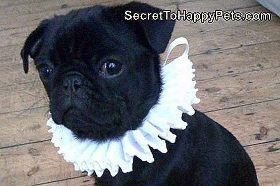 75 Super Classy Shakespearean Pet Name Ideas: shakespearean