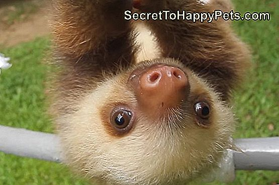 Baby Sloth Saying,