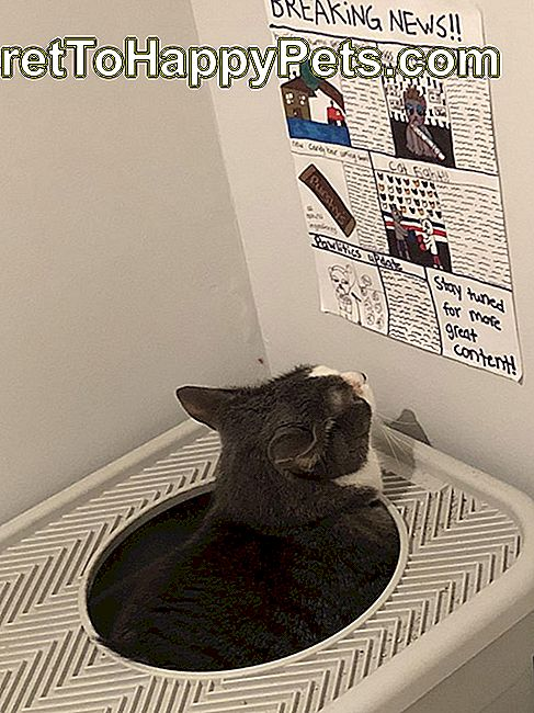 Katze nannte Baba Caught Reading Mewspaper beim Pooping