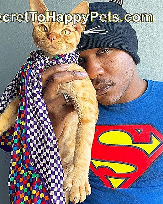 Moshow Cat Rapper