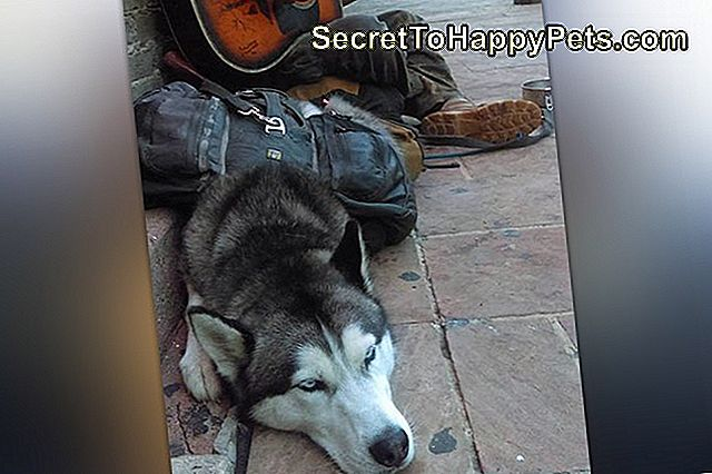 texas-man-with-epilepsy-wiedervereinigt-with-service-husky-after-disput-with-shelter