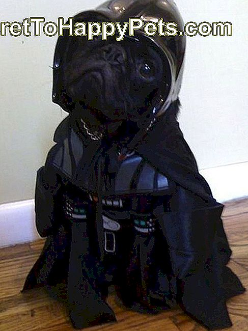 Mops Star Wars Darth Vader
