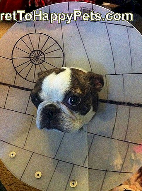 Star Wars Death Star hund