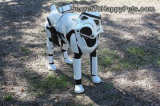 Star Wars stormtrooper doggo