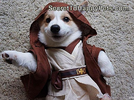 Star Wars Corgi-wan Bone-obi