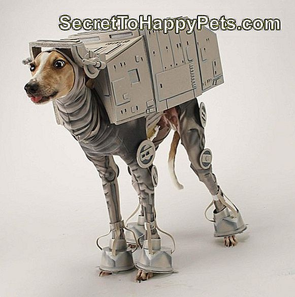Bones Mello, AT-AT Walker Star Wars hund