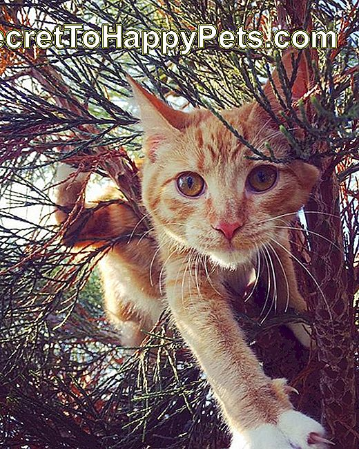 Chat orange dans un arbre