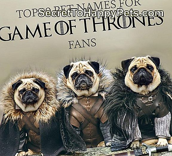 Top 80 Pet Namen Voor Game Of Thrones Fans