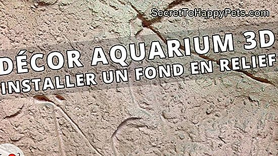 Comment Installer Un Fond D'Aquarium