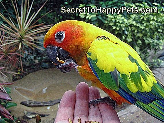 Comment Faire Un Sun Conure Nestbox