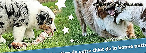 Enseigner À Un Chiot De Venir Quand On L'Appelle