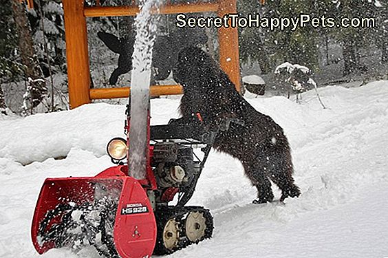 Dog Pushing Snow Blower Żyje W Roku 3018