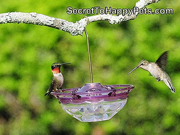 Hummingbird Sugar Water Recipe