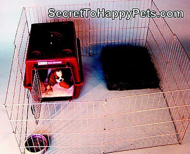 Sugar Glider Potty Training