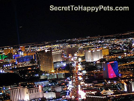 Las Vegas Skytte Survivor Credits Rescue Cat Med Healing Emotional Wounds
