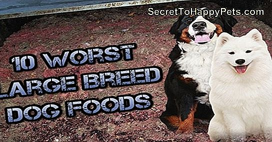 Top 10 Large Breed Dog Foods