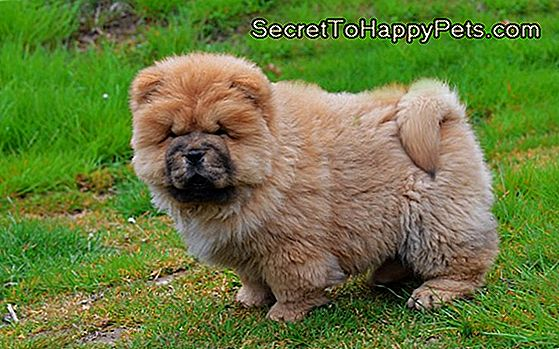 Köpekler Kafa Biti Alabilir Mi Trsecrettohappypetscom