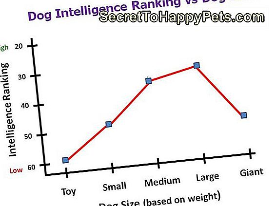 hund intelligens ranking vs storlek diagram