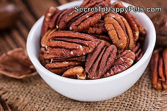 Czy Pecans Bad For Dogs?