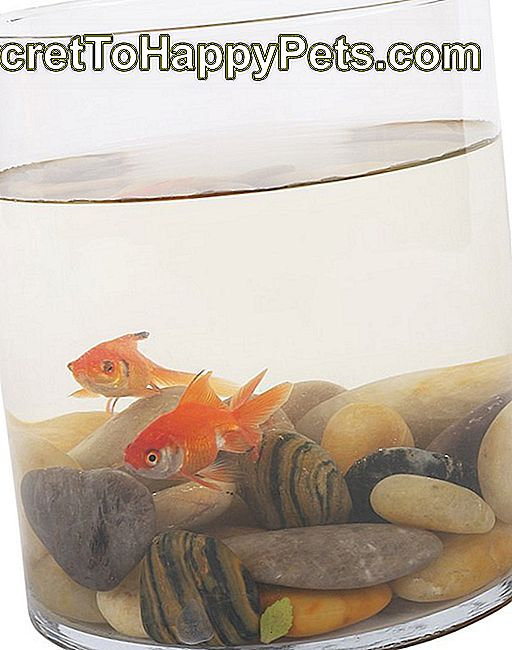 Remediul morții Goldfish: care