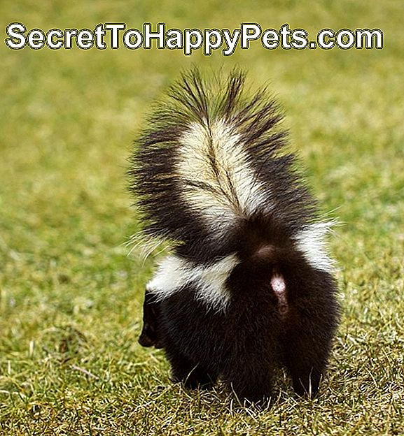 You Do Not Wanna Be Here Striped Skunk
